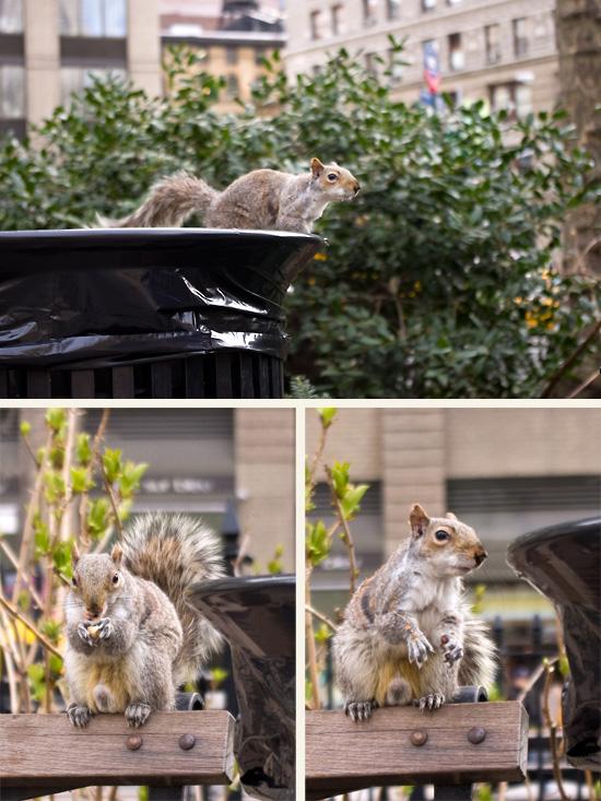 Kollage-Eichhörnchen2